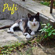 Pufi Katze aus dem Tierschutz