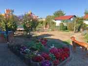 Sehr schöner Kleingarten in Weinheim