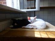 11 kuschelige kätzchen katzenkinder mobil