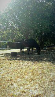 Resthof, Pferdehaltung möglich