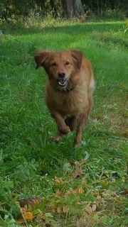 Gassigehen bzw stundenweise Hundebtreuung