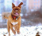 REICO Hundefutter - Testpaket