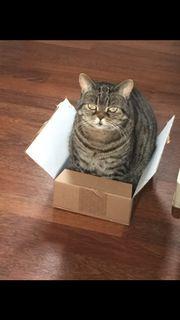 Katze vermisst!
