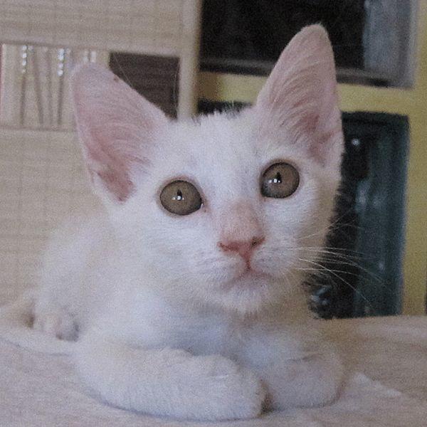 NUDO, PAN & TIRAMISU - » Katzen