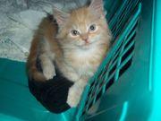 Miau! Chili, 9