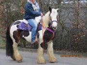 Brave Tinkerstute Bonny -