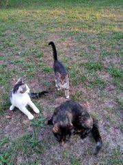 kleine Katzen suchen ein Zuhause -