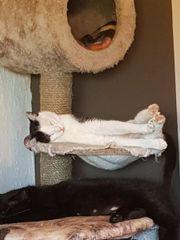 2 Geschwister Katzen