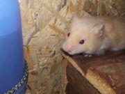 Unsere hamsterbabys dürfen