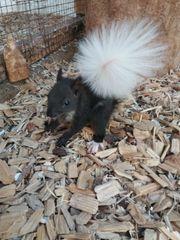 Eichhörnchen geb. 2018