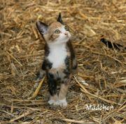 Katzen,Babykatzen,Bauernhofkatze,