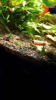 Aquarium Süßwasser mit allem