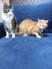 Wir Moritz und Felix suchen