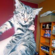 Katze Lilly Fee sucht ganz