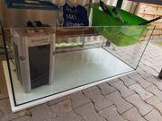 aquarium schildkröten