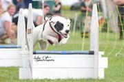 Lust auf Hundesport?
