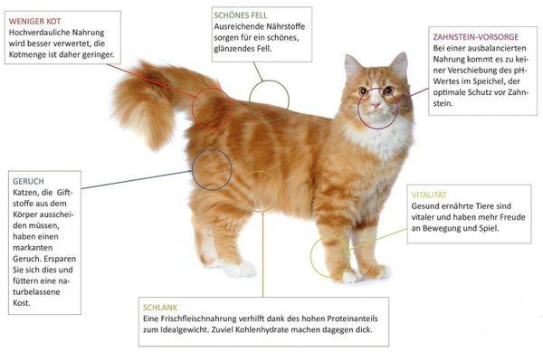 Premium-Katzenfutter mit 99 Fleischanteil