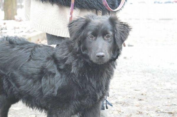 Belinda, süßes Hundemädchen. » Hunde