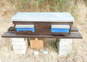 Bienenvolk mit Beute -ohne Heben