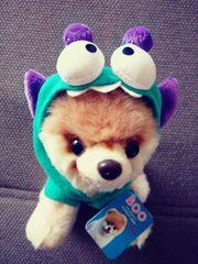 NEU Boo der süßeste Hund