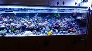 Korallen Salz/Meerwasser