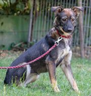 Fee - 8 Monate alt Hund