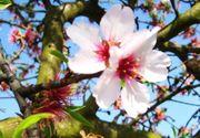 Neu - Ferienwohnung Pfalz Mandelblüte Wachenheim