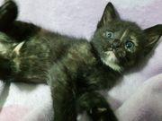 süße Katzenbabys - Babykatzen