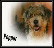 Pepper sucht ihr Kuschelkörbchen
