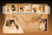 Memory Collage - Katzen,