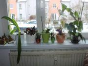 Sechs Topfpflanzen suchen