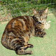 Ane - wunderschön Tigerlady musste erstmal