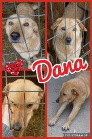 Liebe Dana sucht Aufmerksamkeit