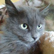 Katze Velvet sucht nach ihren