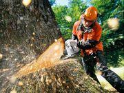 Baumfällungen ob klein