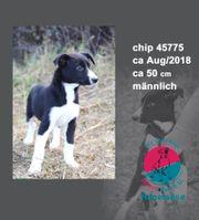 chip 45775 - gibst Du mir