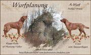 Labrador foxred Wurfplanung