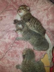 Wunderschöne Kitten! Mischlings
