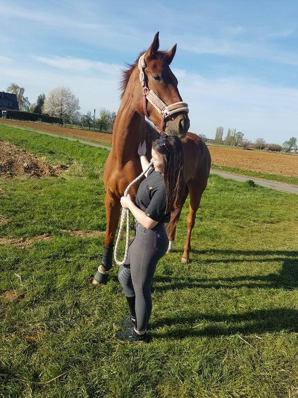 Reitbeteiligung (Pferd sucht Reiter) (Hamminkeln