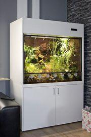 Paludarium Terrarium für Pfeilgiftfrösche Dendrobaten