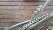 Junge Streifenhörnchen abzugeben