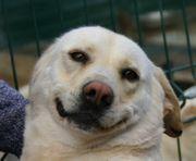Labrador-Mix Terea kann so toll