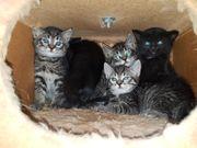 6 kleine Kätzchen