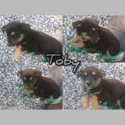 Kleiner Toby sucht liebe Familie