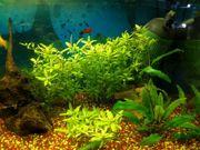 Aquarium 60x30x30cm 54L mit Unterschrank