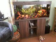 Aquarium 240 Liter