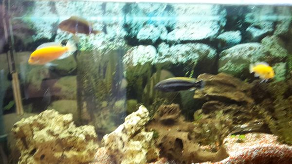 Aquaristik in riedstadt bei deinetierwelt for Kleine zierfische