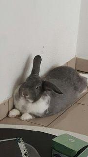 Kaninchen männlich 3