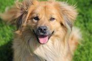ROBY Einsamer Hund sucht einsame
