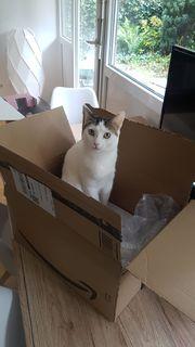 LARA - fröhliches Katzenmädchen sucht ihre